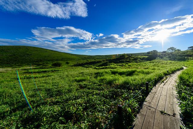 夏の日差しと霧ヶ峰高原の遊歩道の写真