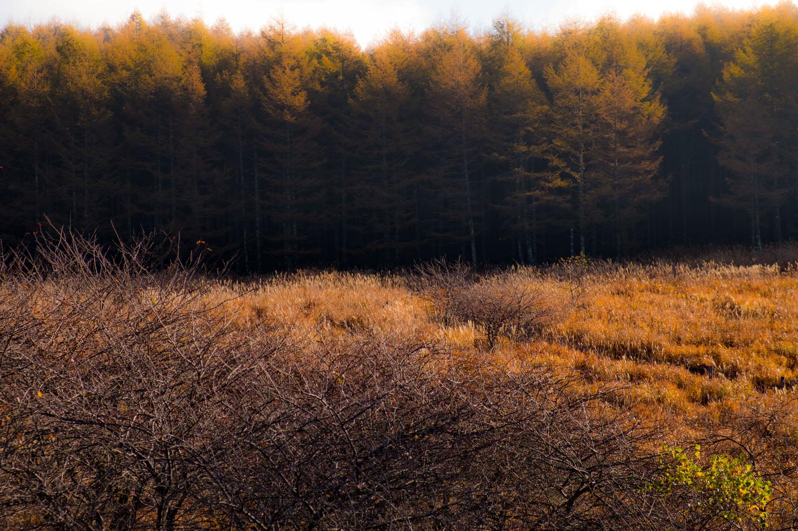 「秋色の山林」の写真