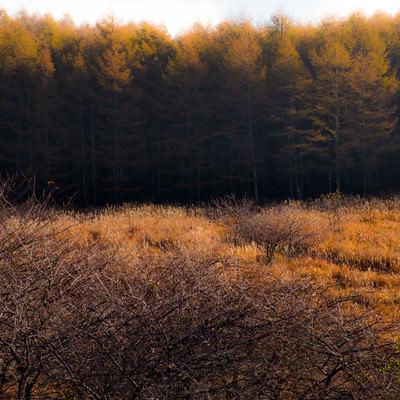 秋色の山林の写真