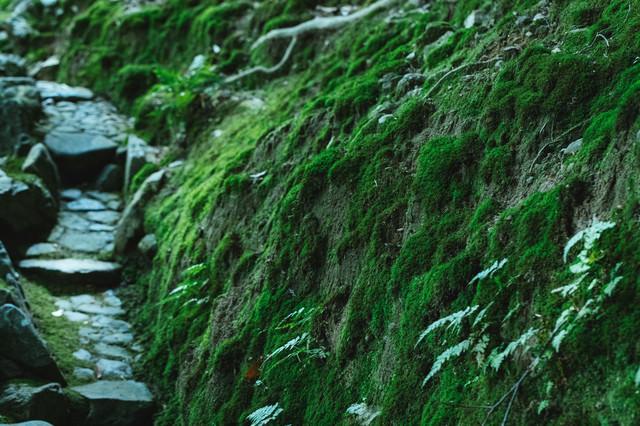 道横に生える苔の写真