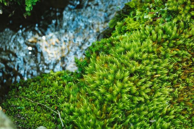 小川と苔の写真