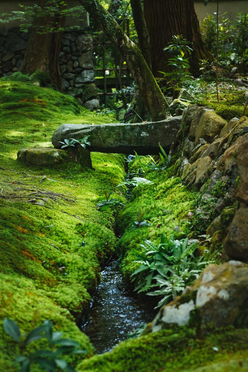 「苔一色のお庭(苔寺)」の写真