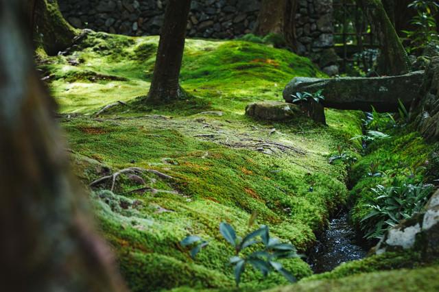 苔に包まれるの写真