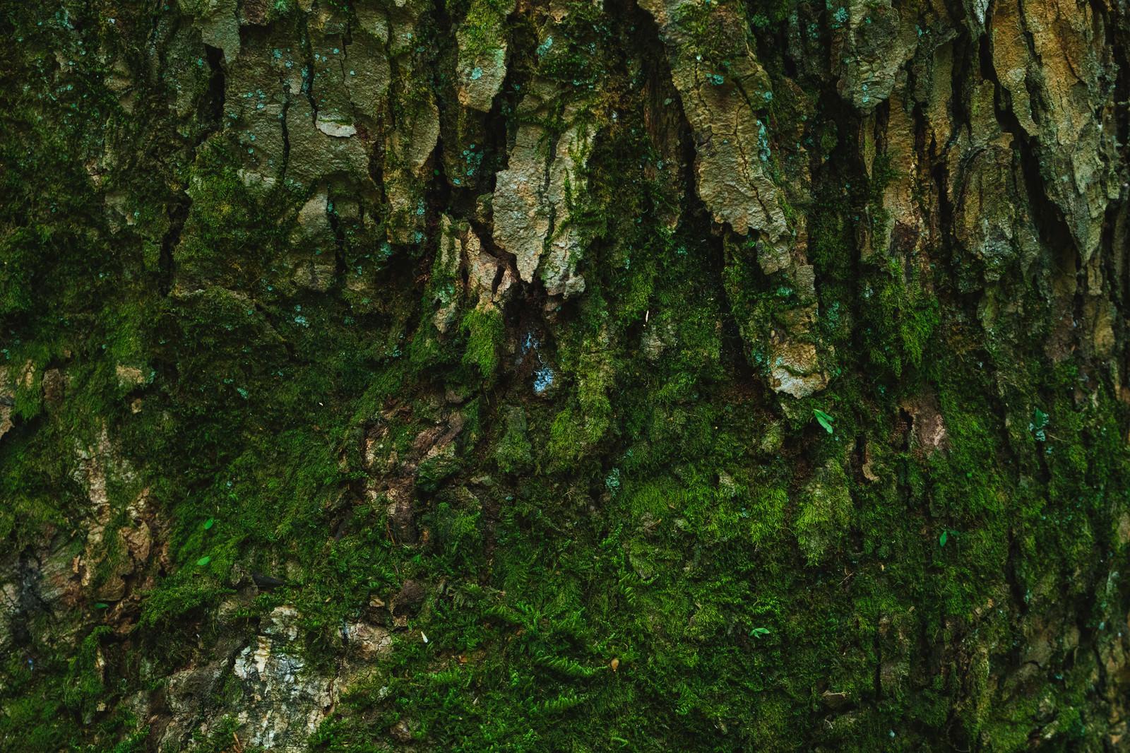 「樹皮と苔」の写真
