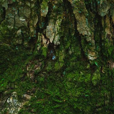 樹皮と苔の写真