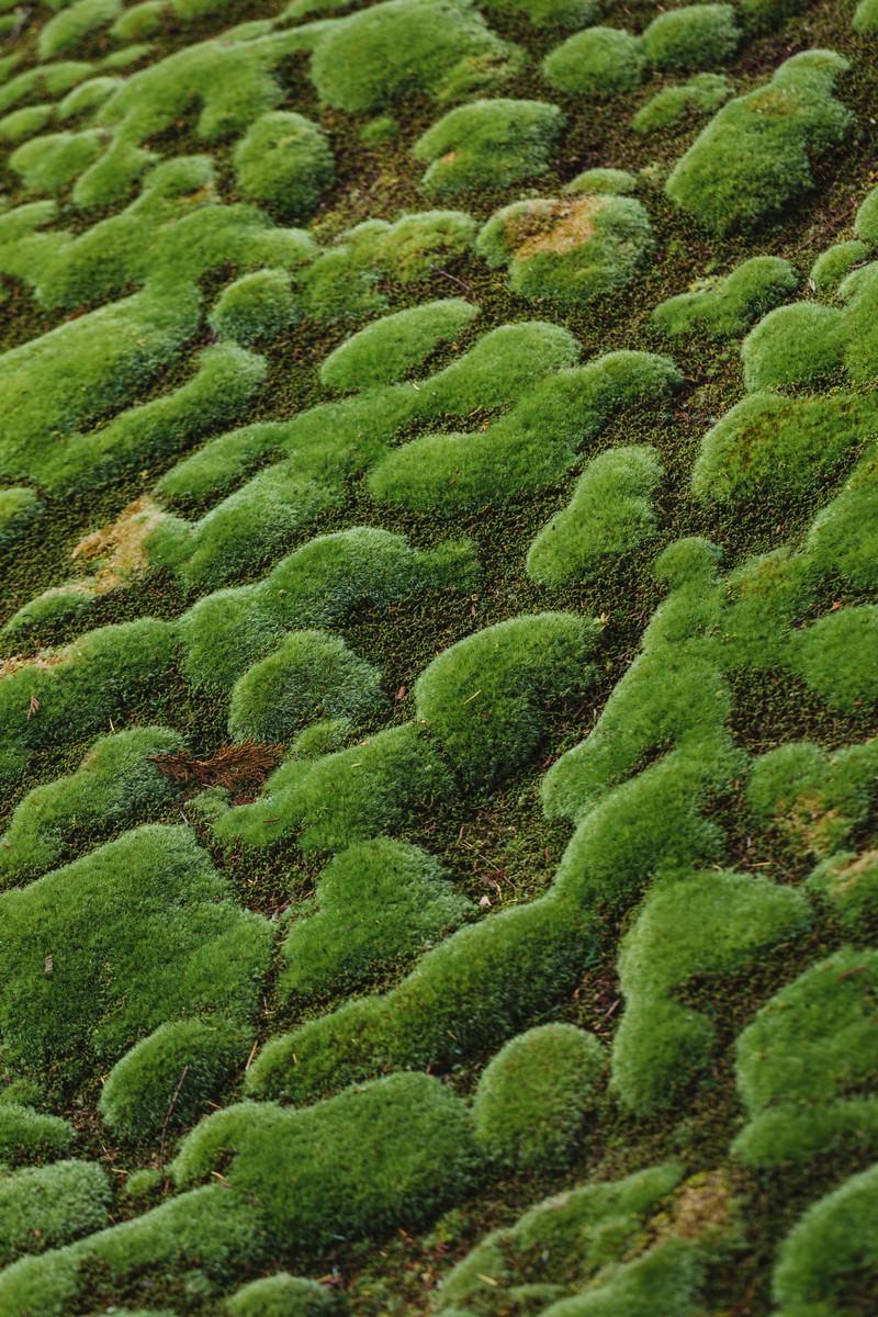 「苔もっこり苔もっこり」のフリー写真素材を拡大