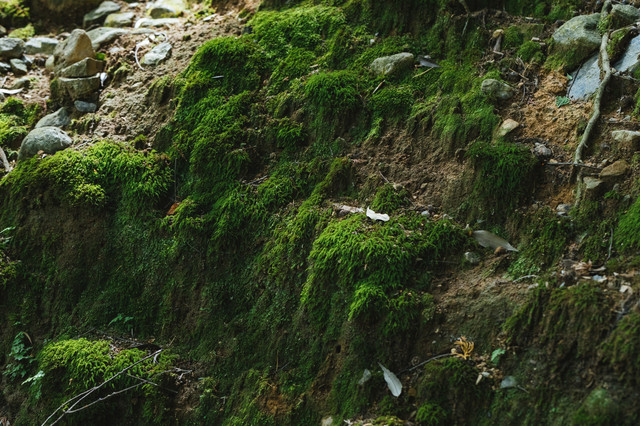 壁面に生える苔の写真