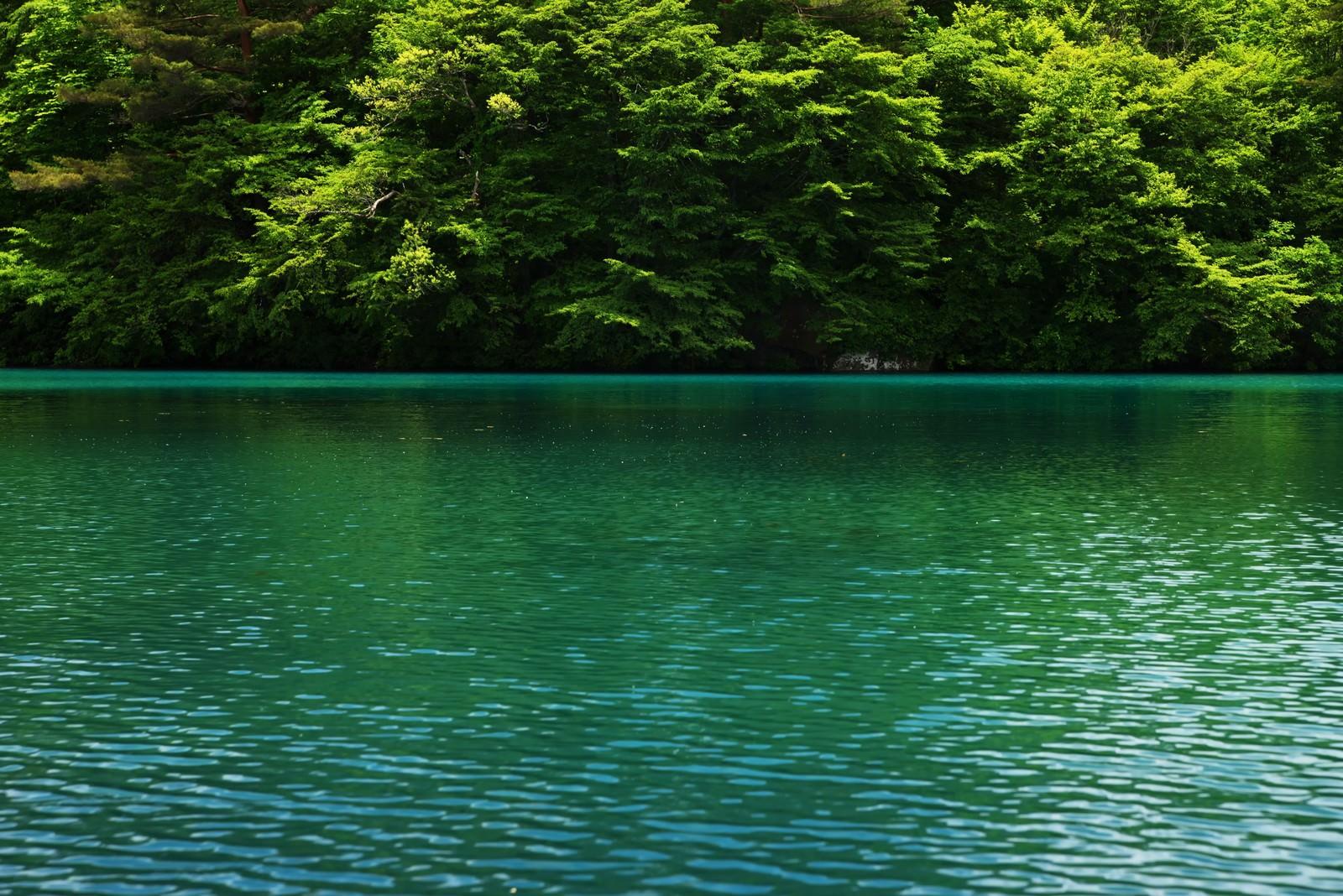 「コバルトブルーの五色沼」の写真