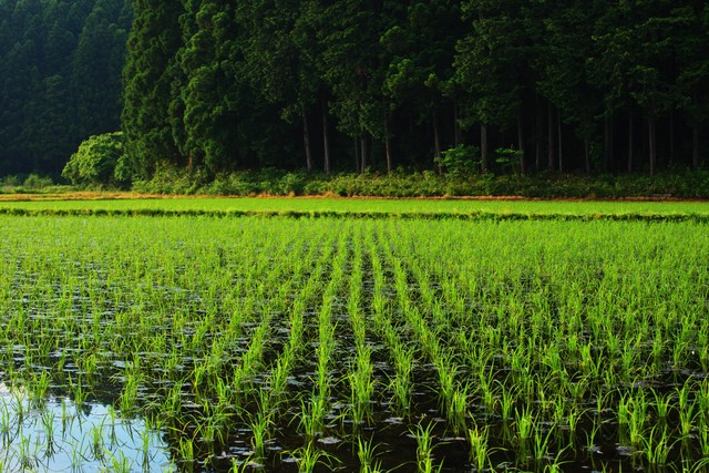 水田に水の張った田園風景の写真