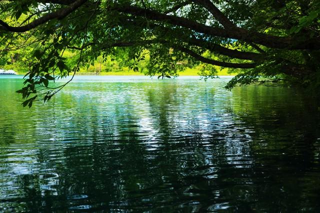 木陰と五色沼の水面の写真