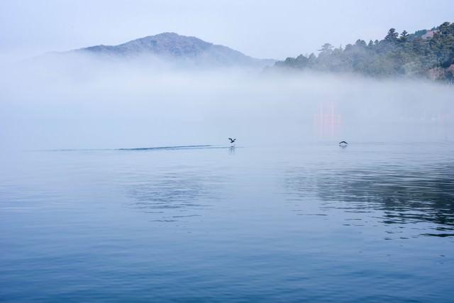 朝霧の中を離水する水鳥の写真