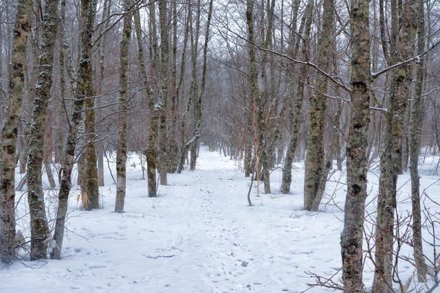 雪の中の自然探索路の写真