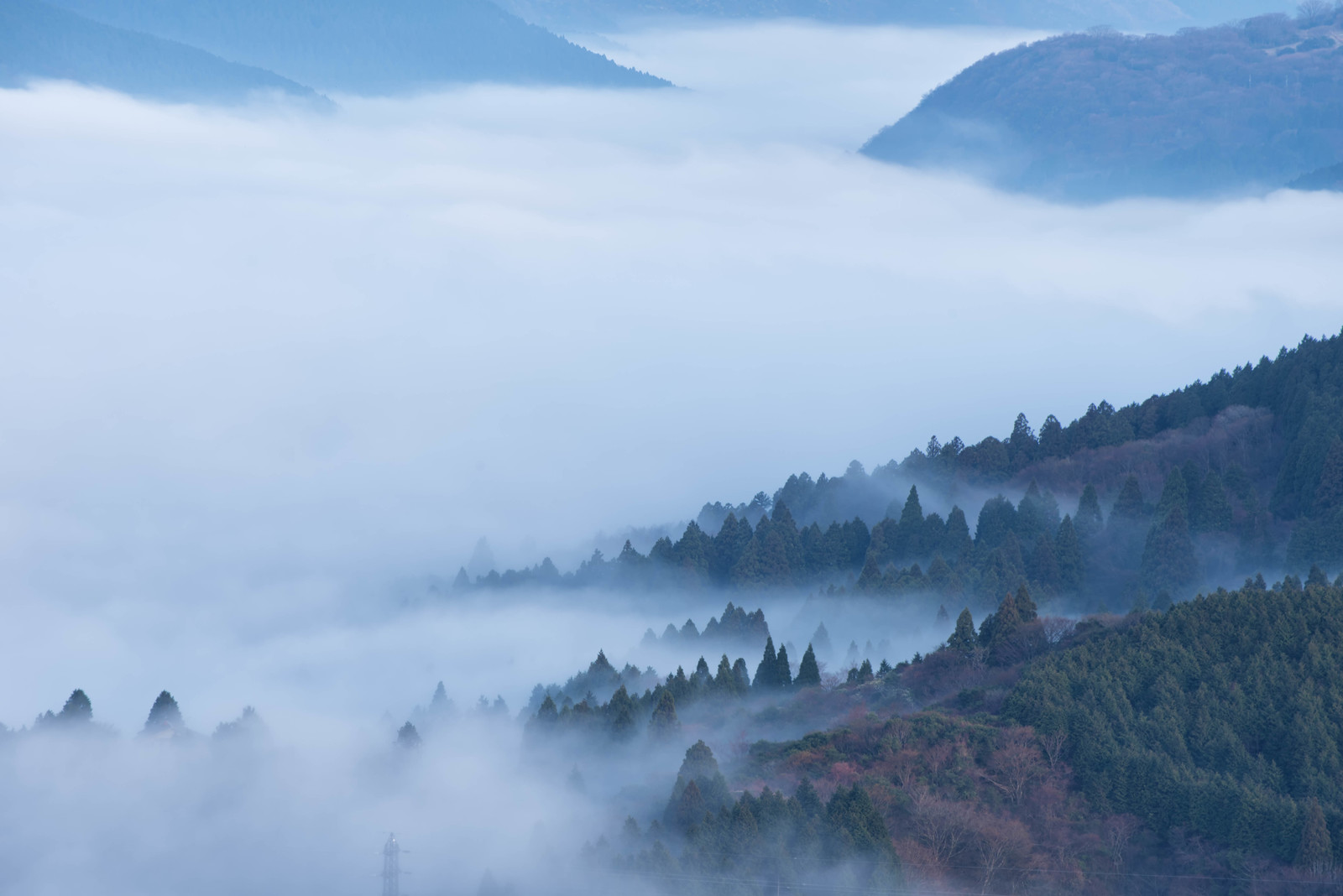 「霧に包まれる箱根の森 | 写真の無料素材・フリー素材 - ぱくたそ」の写真