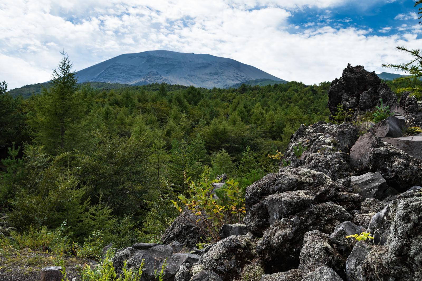 「浅間山大噴火の溶岩の凝固地帯」の写真