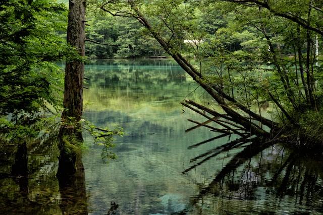 上高地の大正池の写真