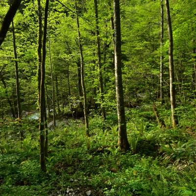 北アルプスの森の写真