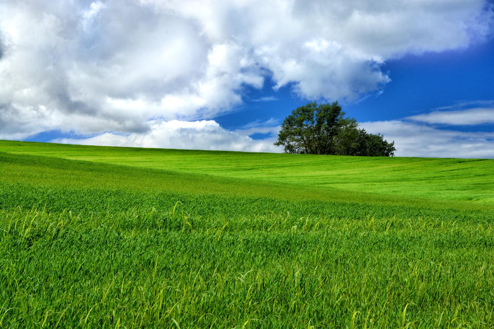「北海道にある大草原の風景」