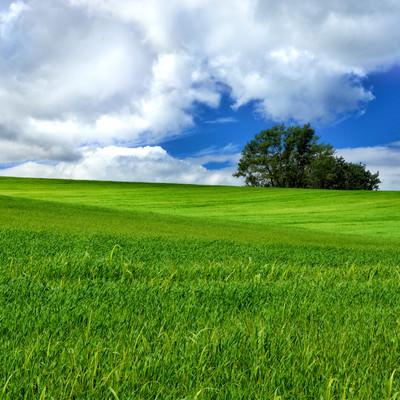 北海道にある大草原の風景の写真