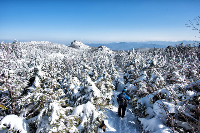 白く染まる樹林帯を進む登山者の写真