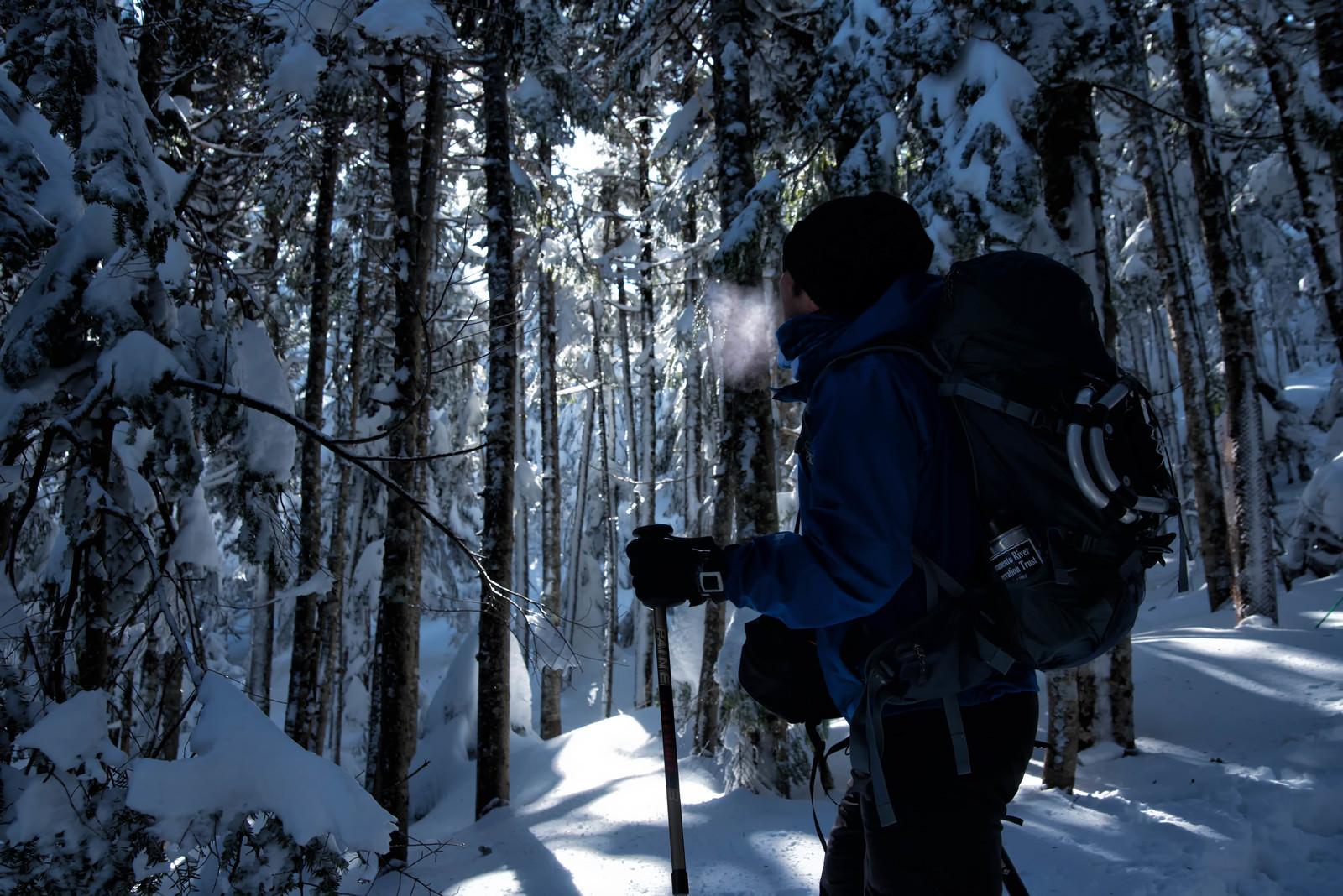 「雪山の森林を進む登山者の男性」の写真