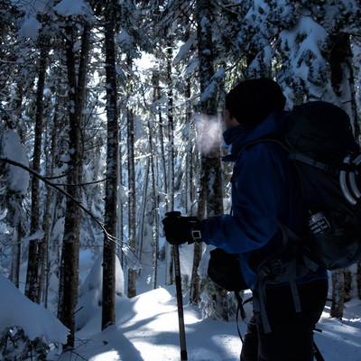 雪山の森林を進む登山者の男性の写真