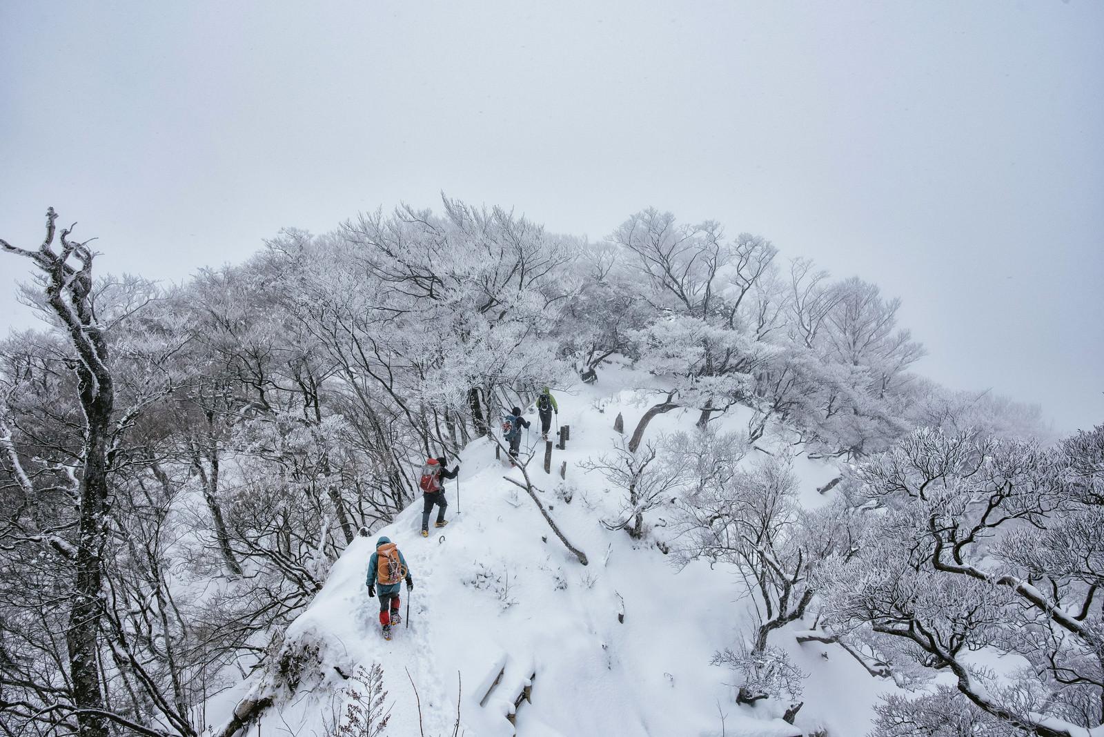「丹沢主稜線を進む登山パーティー」の写真
