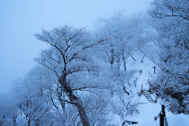 丹沢雪景色の写真