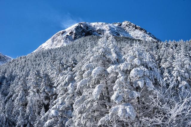 白い森と阿弥陀岳の写真