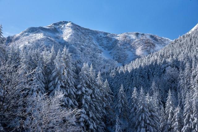 雪で白く染まった森の木々の写真