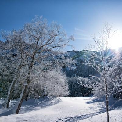 日で輝く樹氷の写真