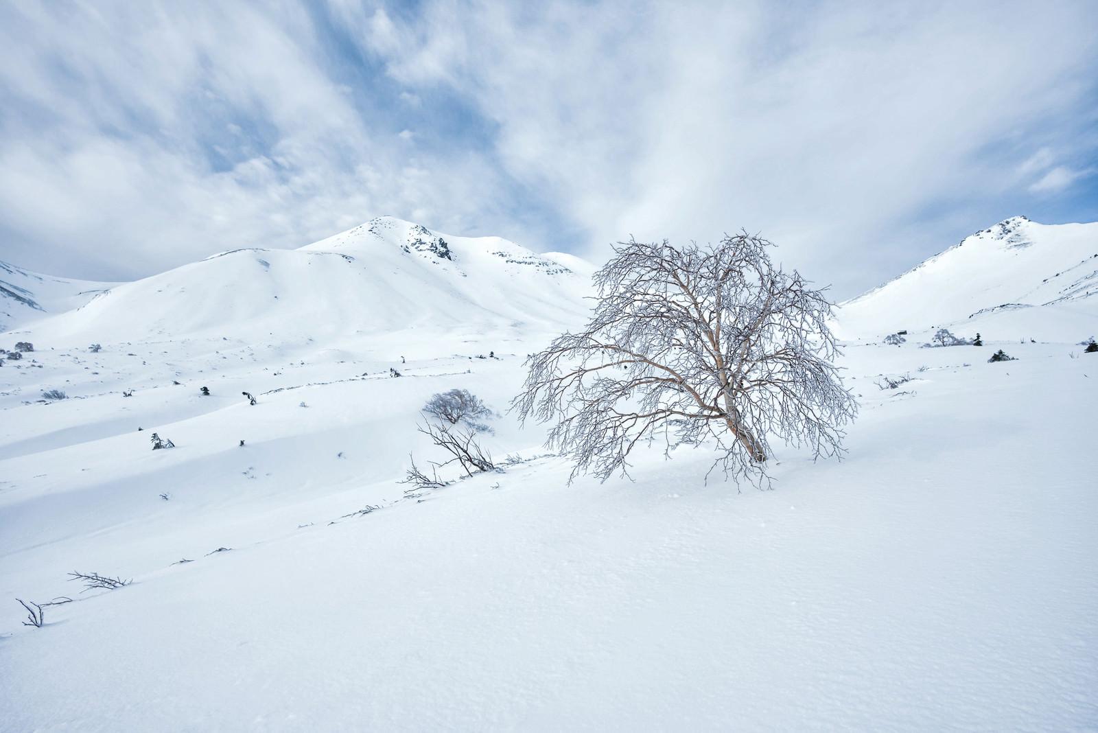 「厳冬の乗鞍高原に佇む樹木」の写真