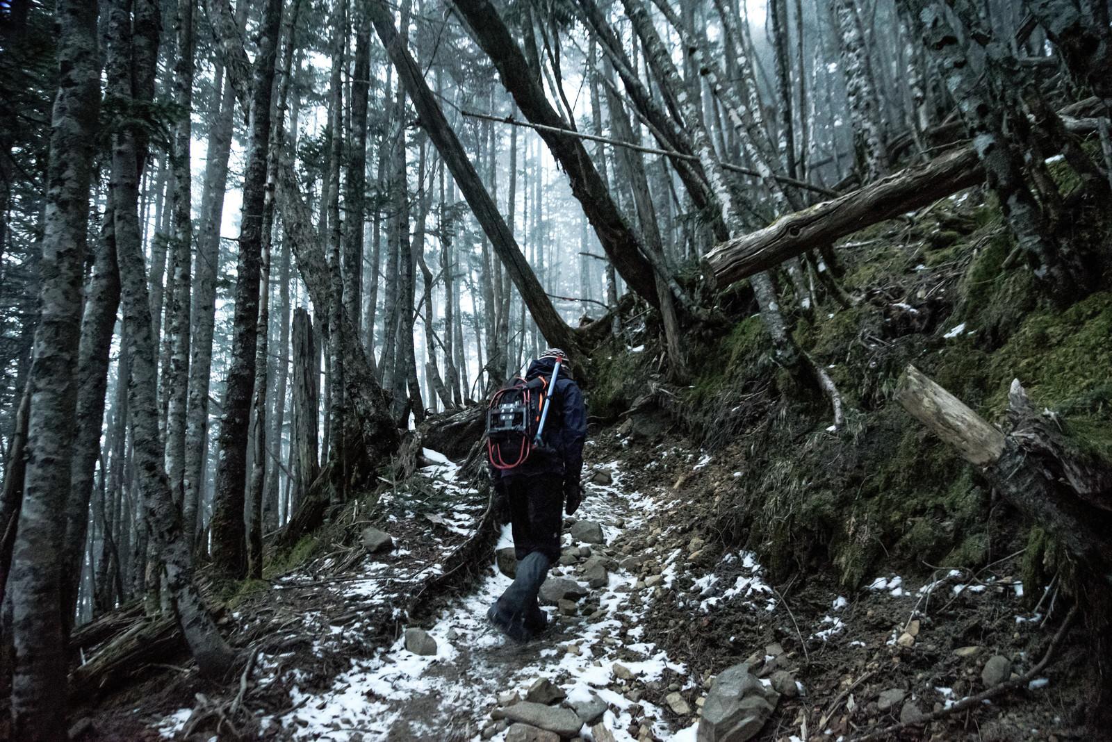「初冬と倒木の森を散策する登山者」の写真