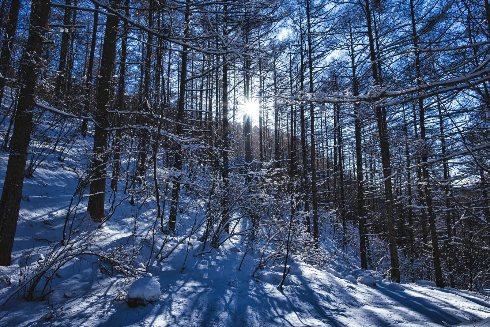 「西日差す積雪の森に伸びる影」の写真