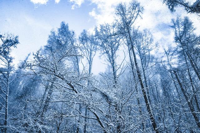 雪化粧した森と垂れ雪の写真