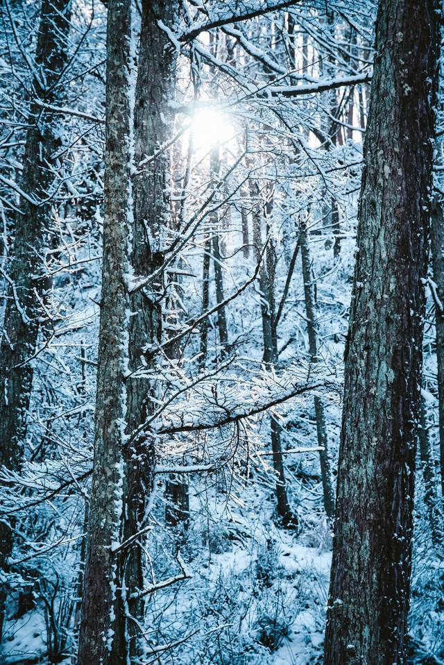 雪化粧した木々の間から差し込む光の写真