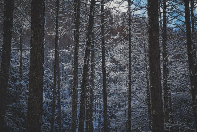 雪化粧した森の中の写真