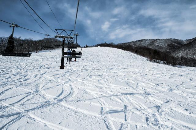 未圧雪斜面に付いたシュプール(白馬五竜スキー場)の写真