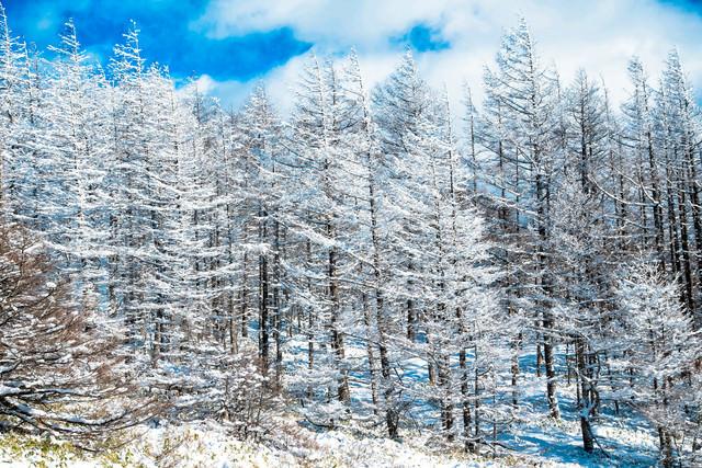 白銀の世界と霧(美ヶ原)の写真