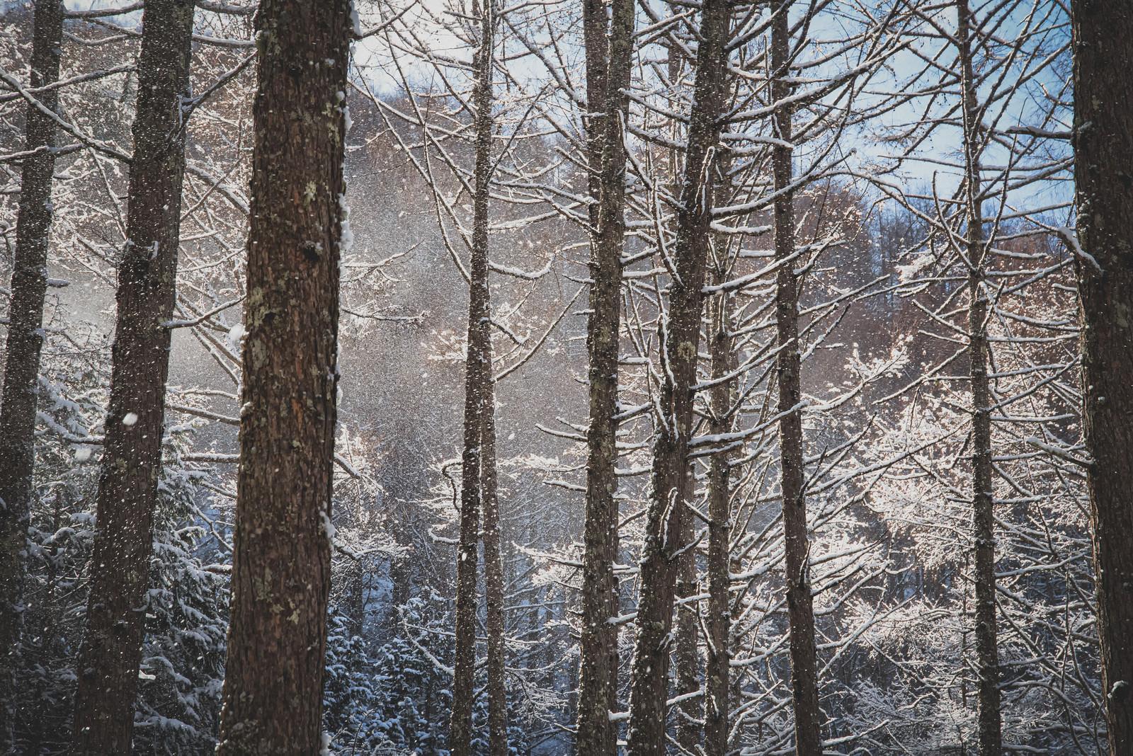 「垂れ雪がきらめく森」の写真