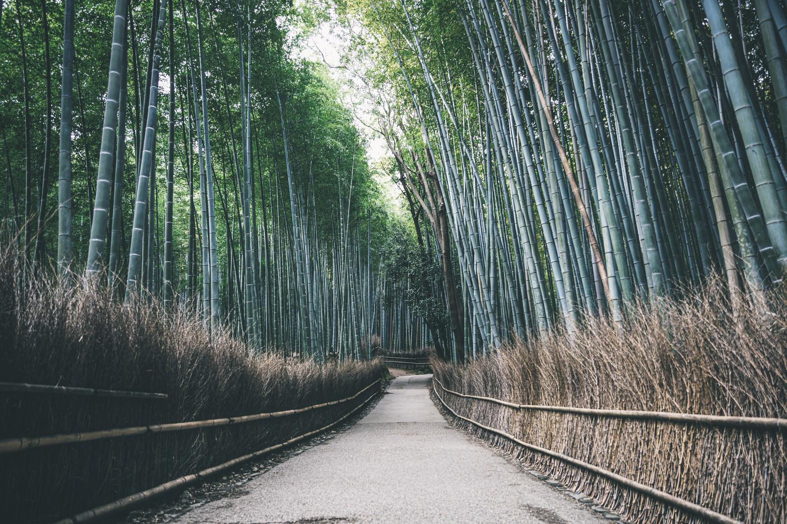 「竹林の小径(京都嵐山)」の写真