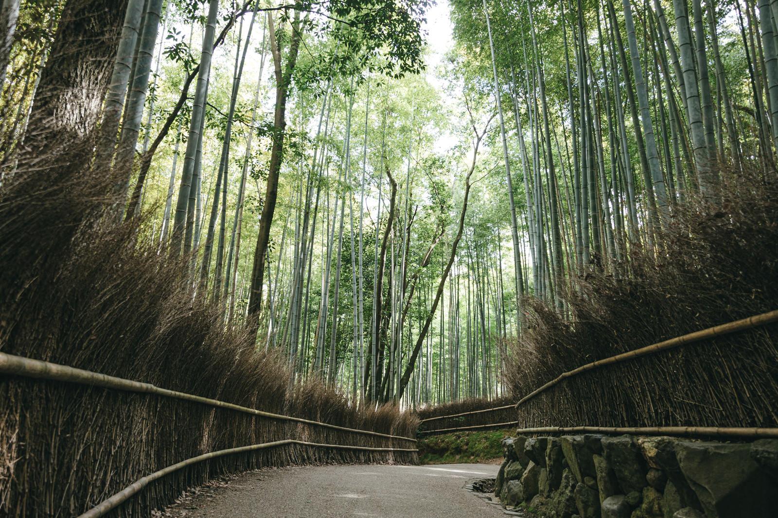 「京都嵐山にある竹林の小径」の写真