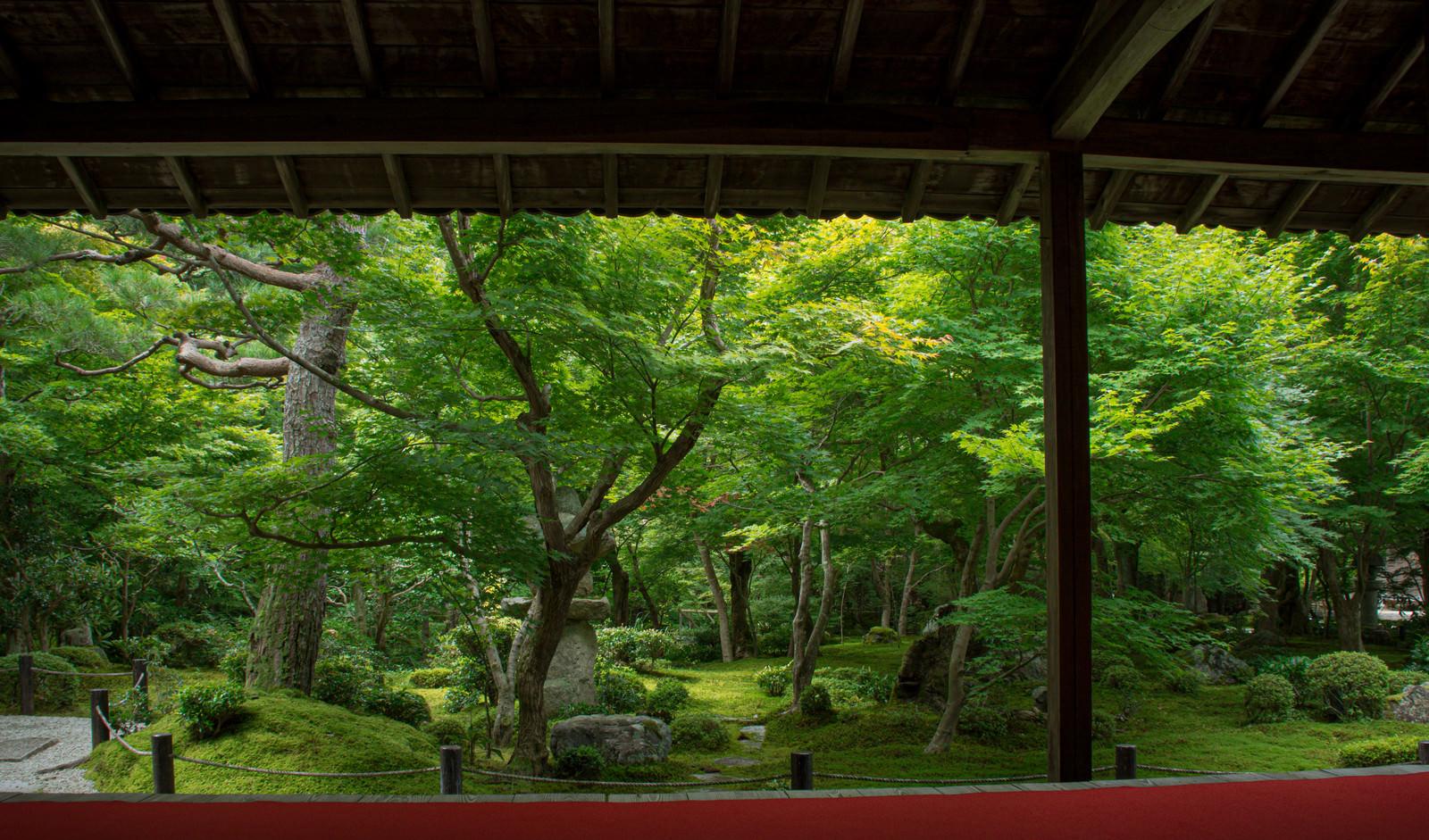 「新緑の庭を楽しむ」の写真