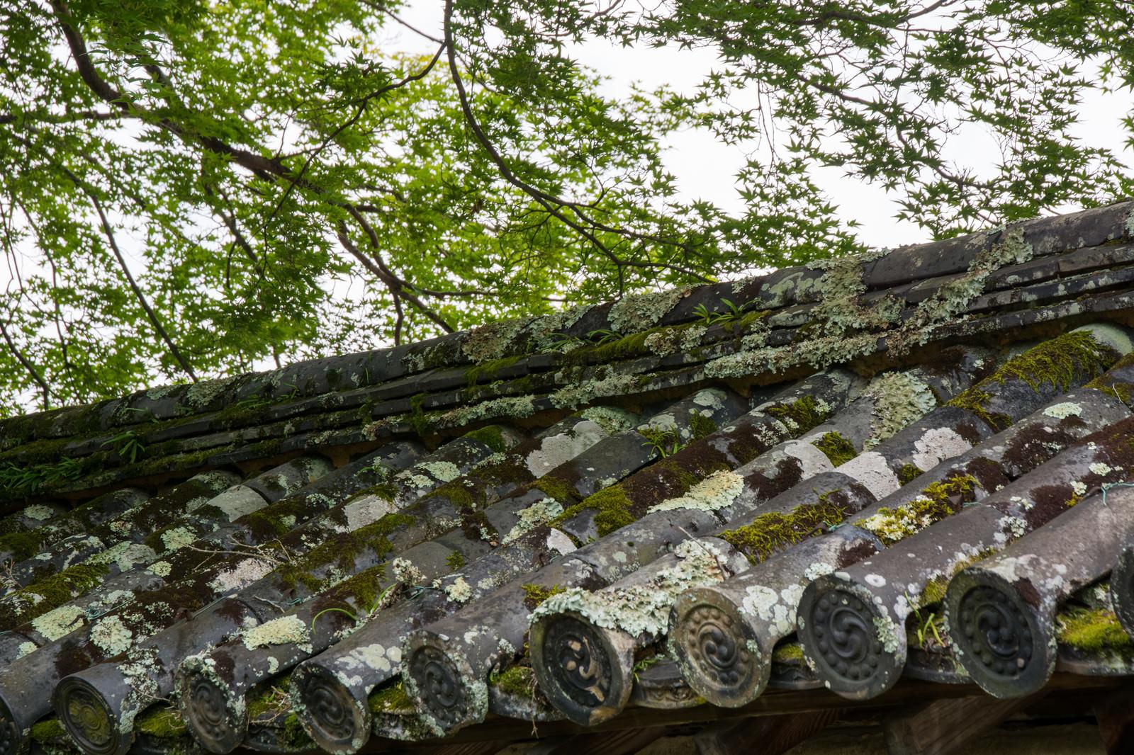 「たくさんの苔がついた瓦」の写真