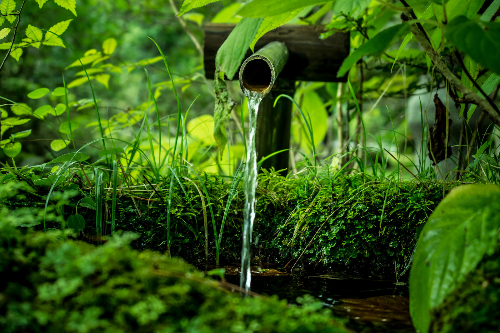「竹筒から流れる水」の写真