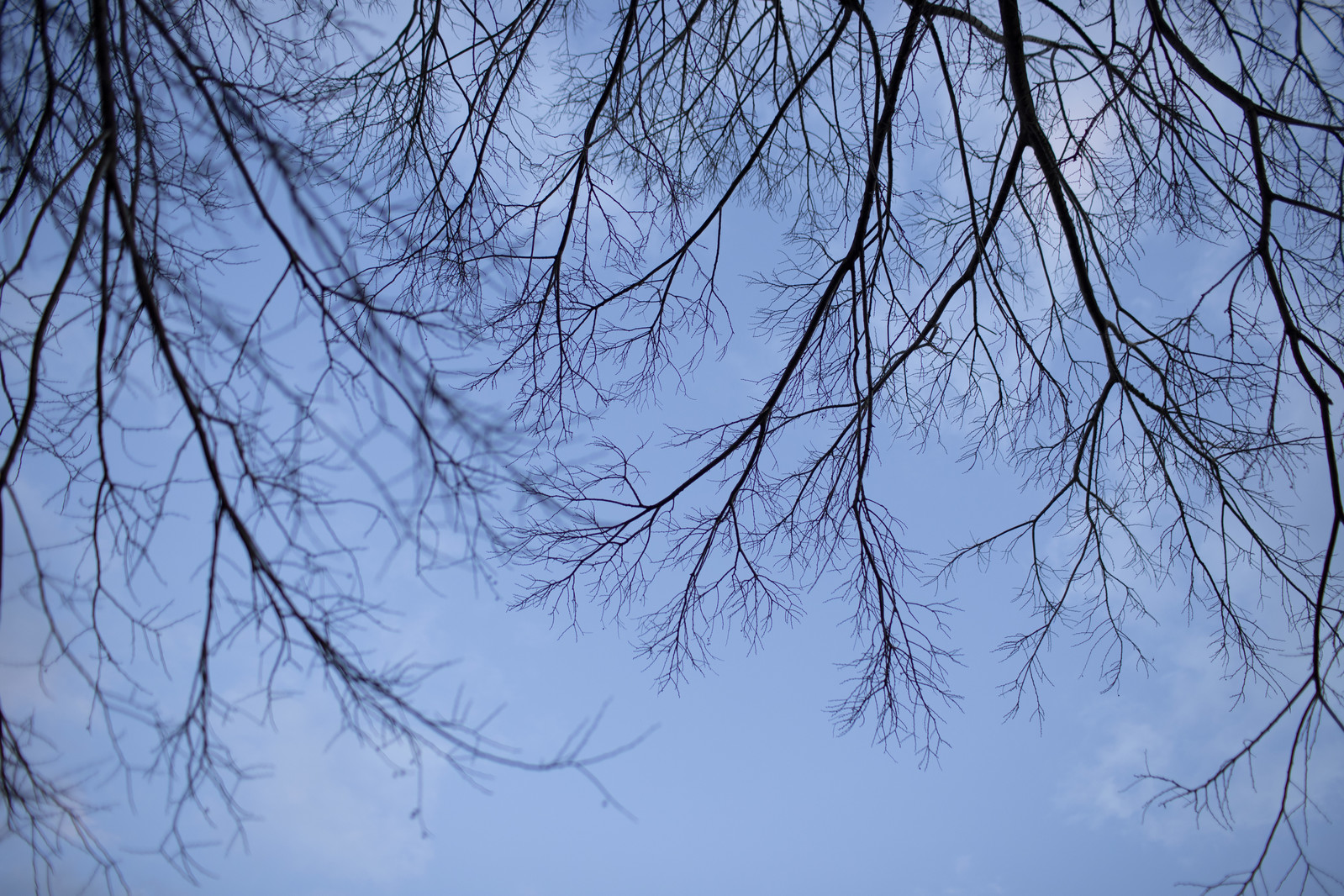 「空に這う木の枝」の写真