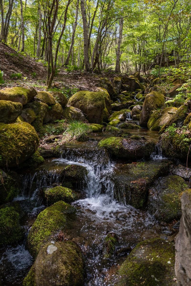 「森の中を流れる川」の写真