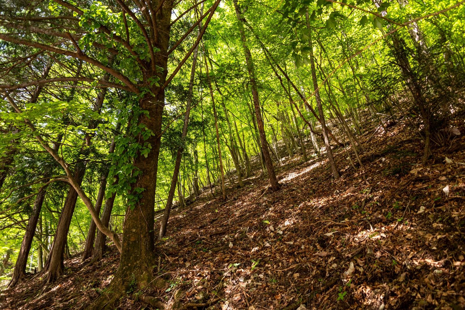 「新緑の木漏れ日」の写真