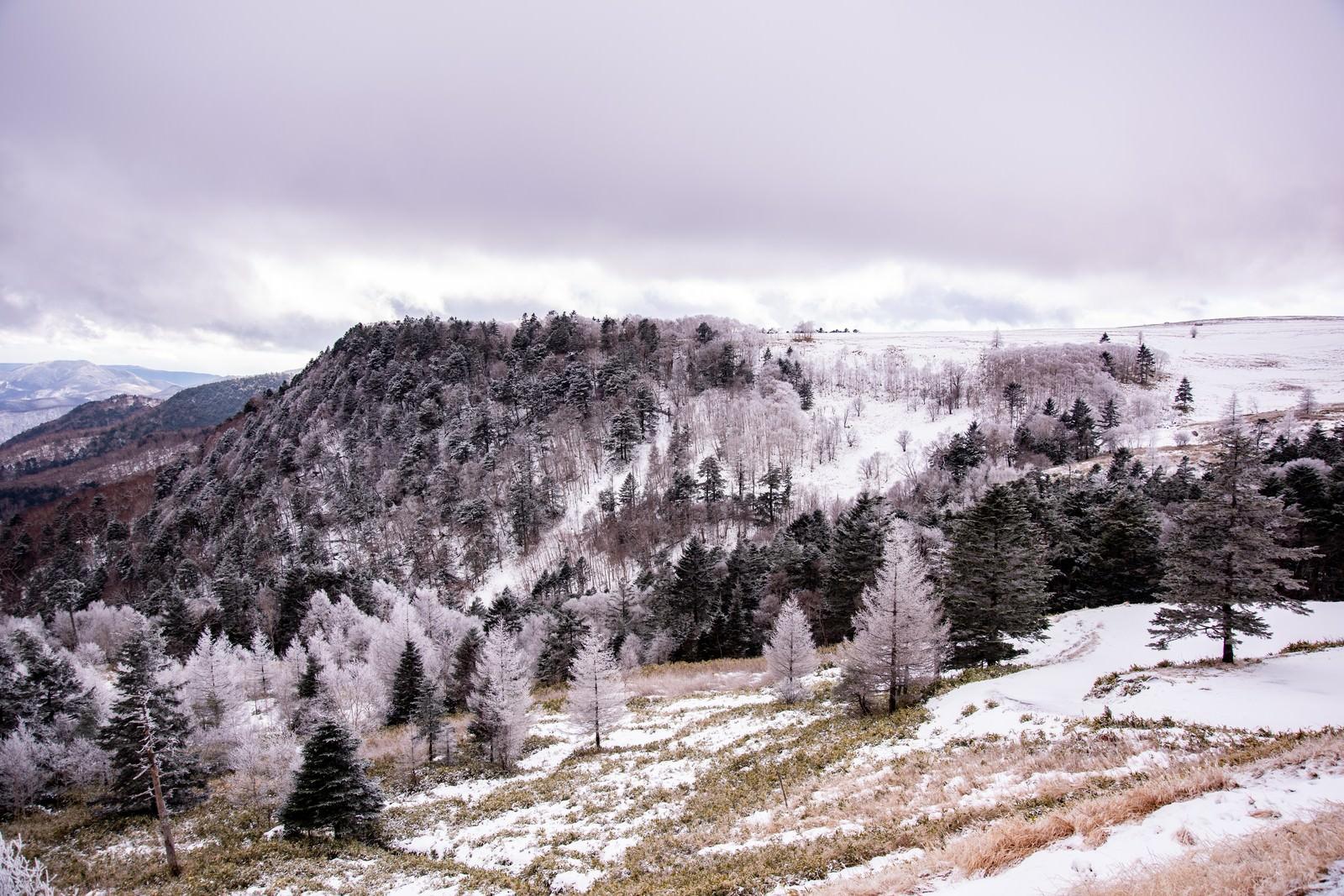 「雪化粧の美ヶ原」の写真