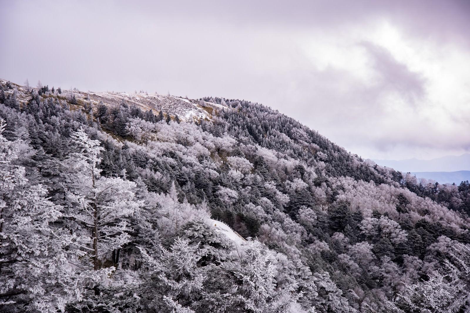 「冬の樹氷の森(美ヶ原)」の写真