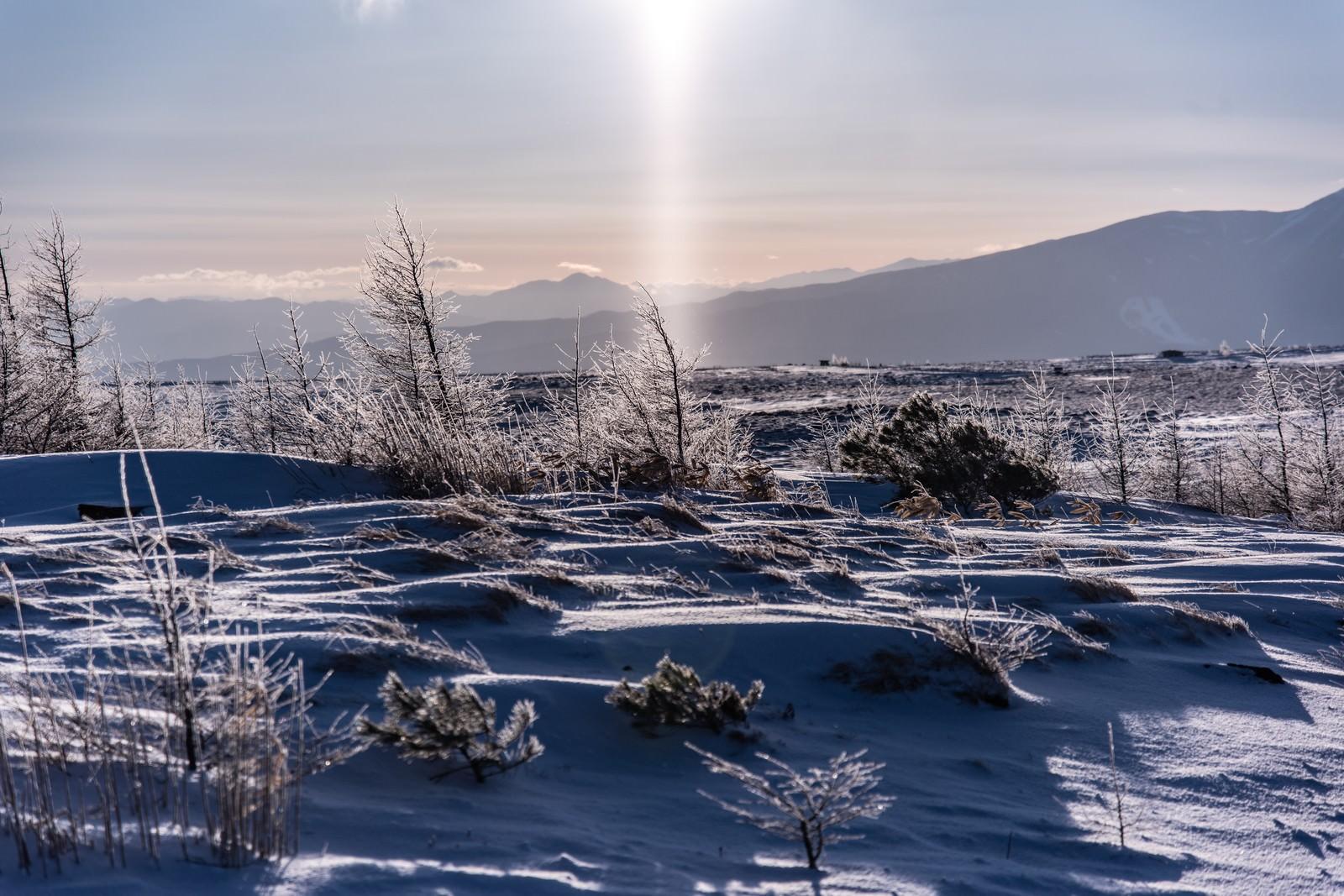 「美ヶ原高原の樹氷に降り注ぐサンピラー(太陽柱)」の写真